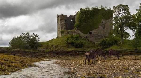 Lachlan Castle by Coracre