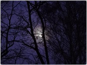 wintermoon behind the tree
