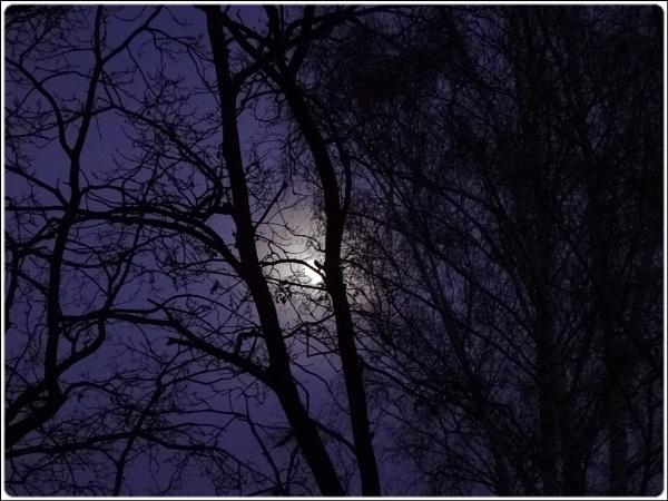 wintermoon behind the tree by FabioKeiner