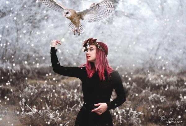owl town by MyOwnWonderland