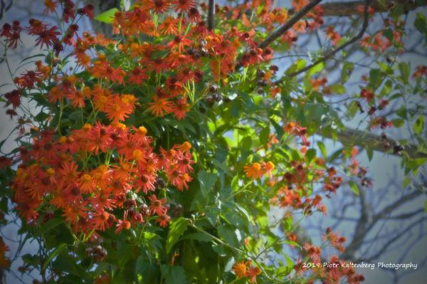 Winter Flowers by PetesPix