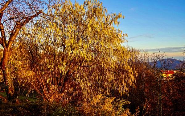 Winter Sunrays by LoryC