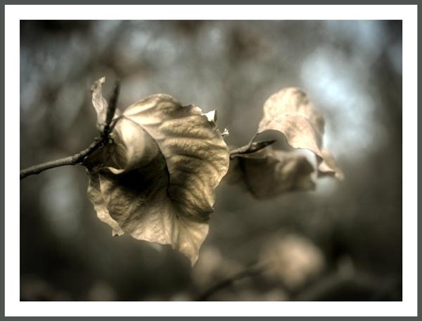 Winter Leaf by kw