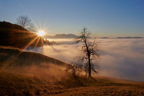Over the Fog by manham