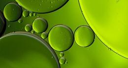 Photo : Olive Oil