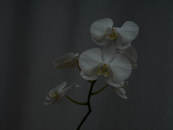 flowers by Kurczewskit