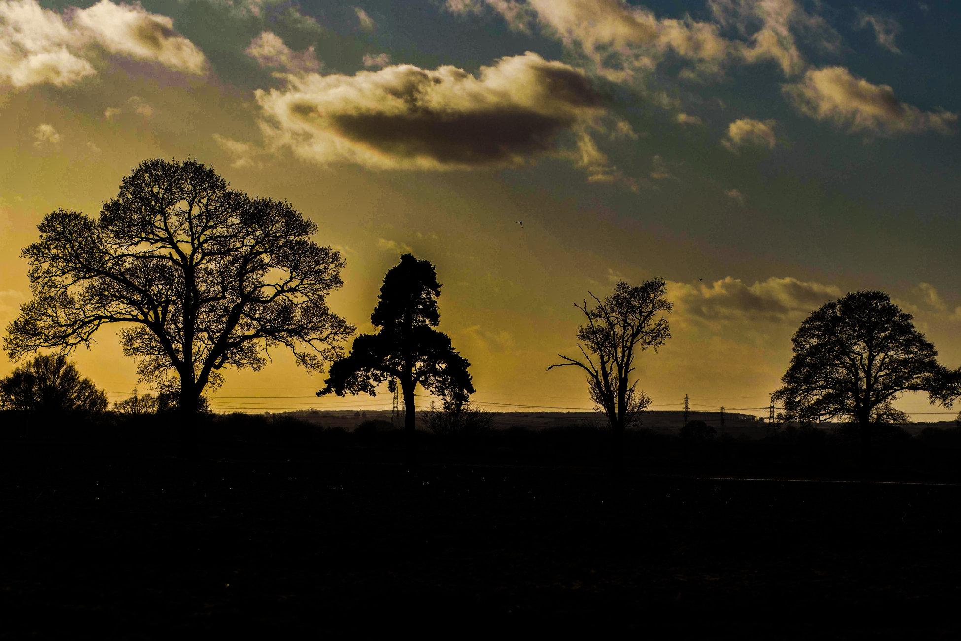 """""""Skyline of Trees"""""""