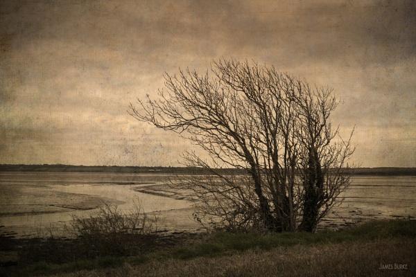 Estuary by jameswburke