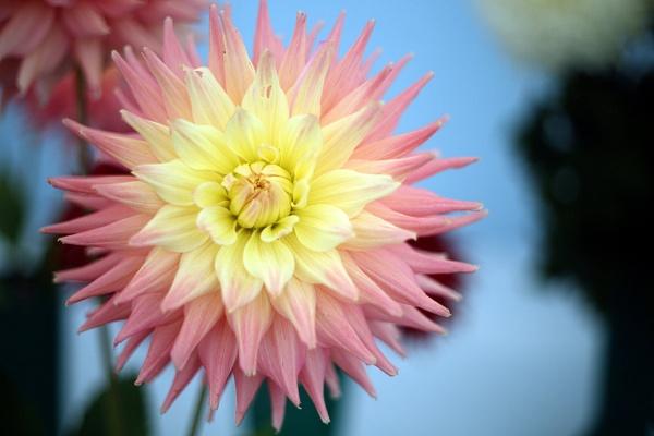 Last Year\'s Bloom by RysiekJan