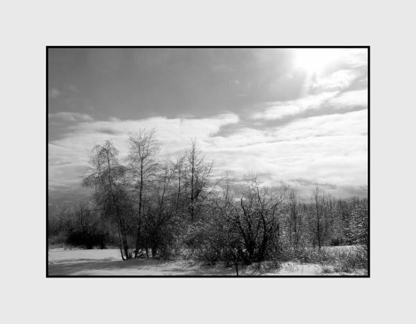 Winter Sun by Joline