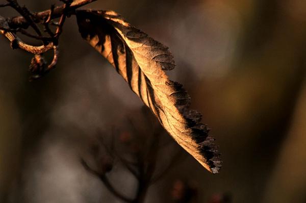 Leaf by viscostatic