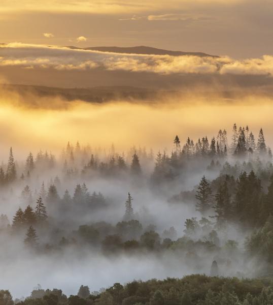 Callander Woods by PaulHolloway