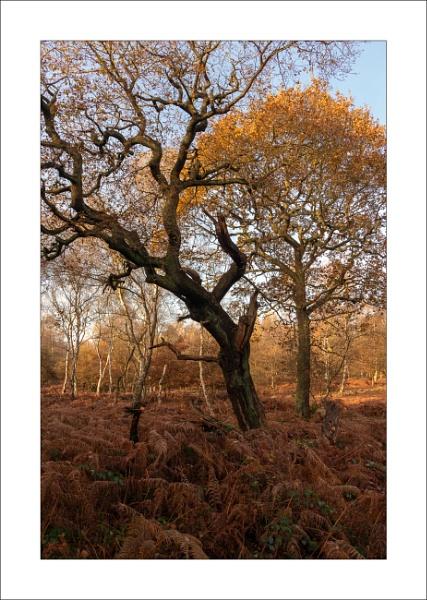 Sherwood Oaks by Steve-T