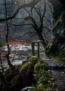 Hafod Estate - West Wales by Meditator