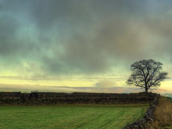 Lone Tree Morning by ianmoorcroft