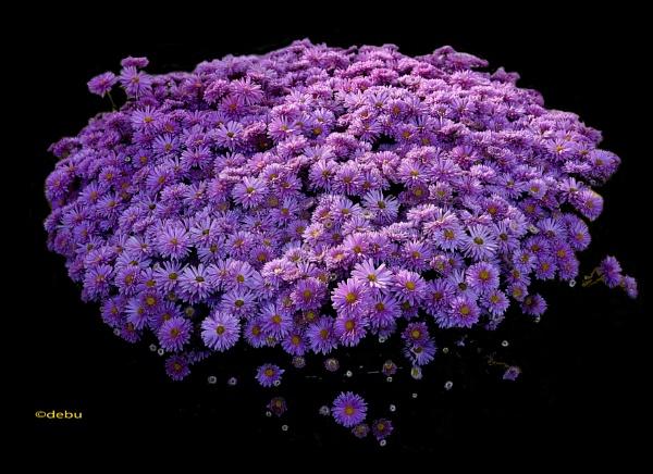 Perfect flowers..2 by debu