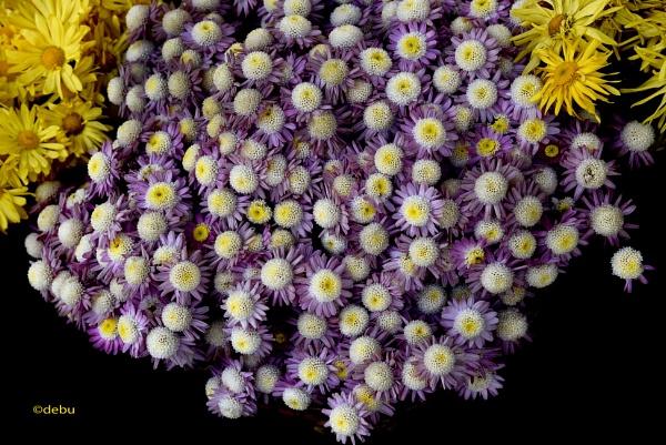 Beautiful Flowers by debu