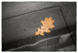 Oak Leaf on Bid Lid