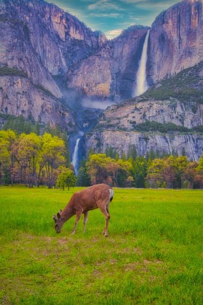Yosemite Falls by john_w168