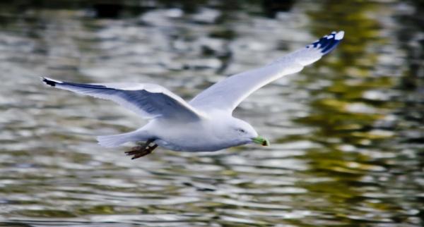 flying high by steveo12