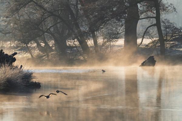 On Golden Pond by Trevhas