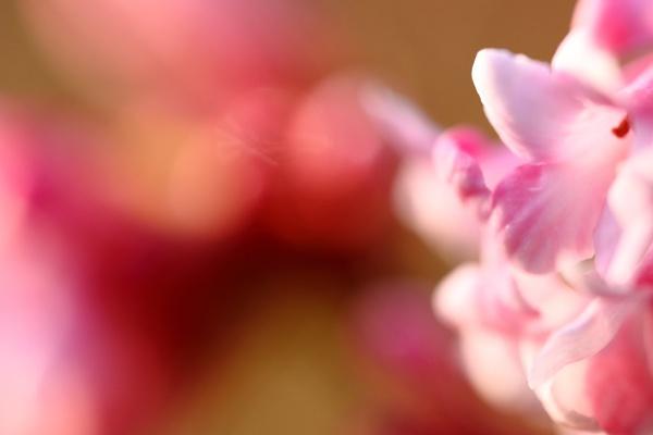 pink shrub by retroman