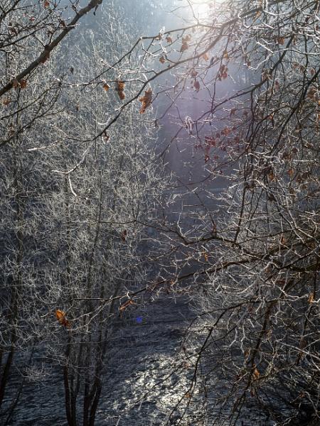 winter on the banks of the Savinja River by Izak1333