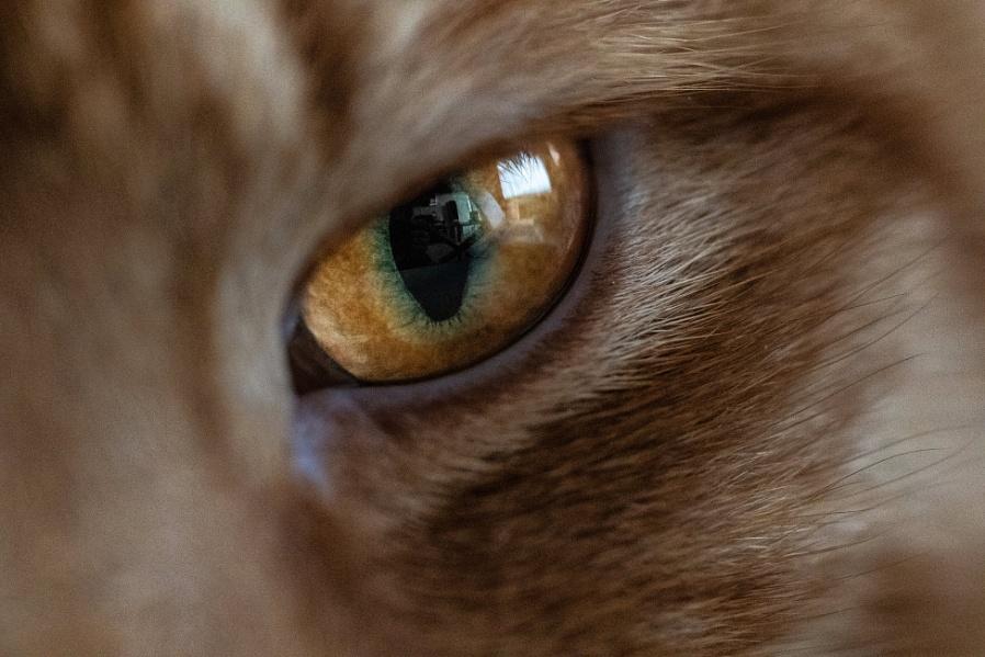 Cat Eye !