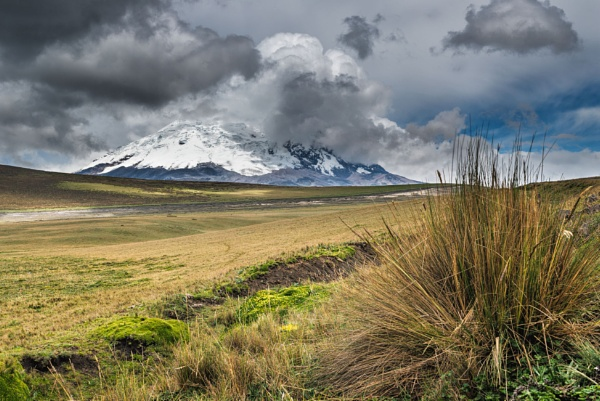 Antisana volcano and páramo tundra by macxymum