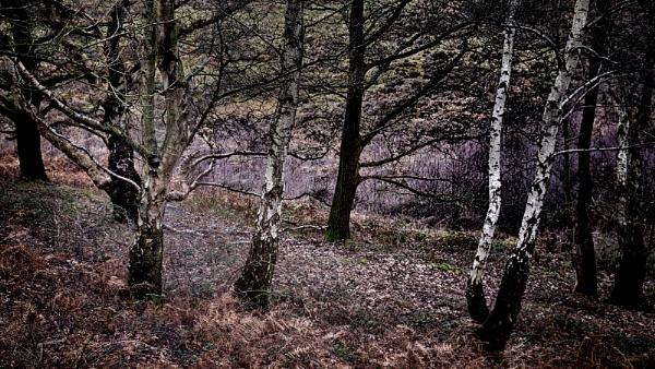 Mystical wood by fredsphotos