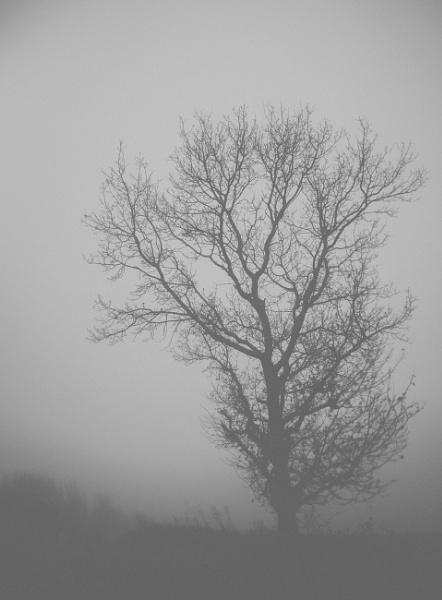 Tree by antek76