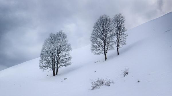 Winter Trees by Leedslass1