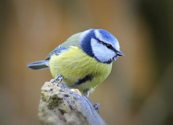 """A Hungry Bird""."