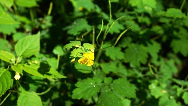 Small yellow blossom by SauliusR
