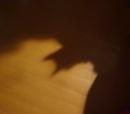 Cat-bat by Kabrielle