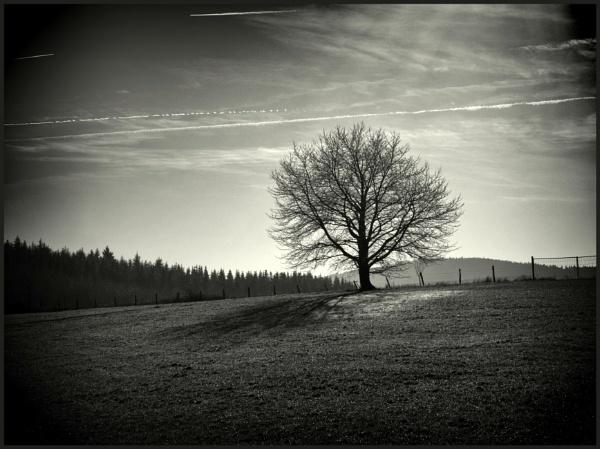 Winterday by kw