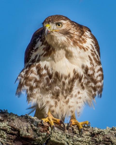 The Hawk Sees by HoiPolloi