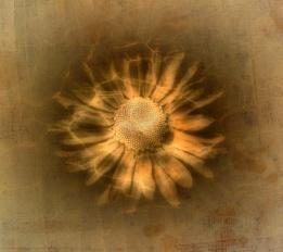 A Flowery Flourish MkII