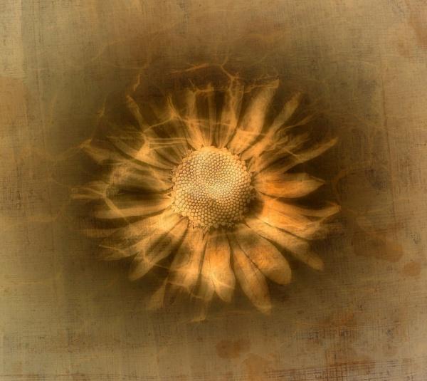 A Flowery Flourish MkII by adagio
