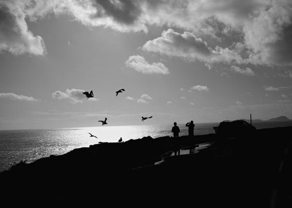 Feed The Birds by WarrenLight