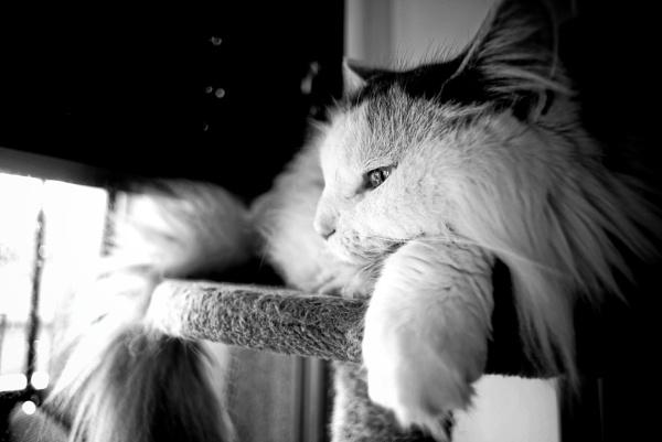 Daydreamer by icipix