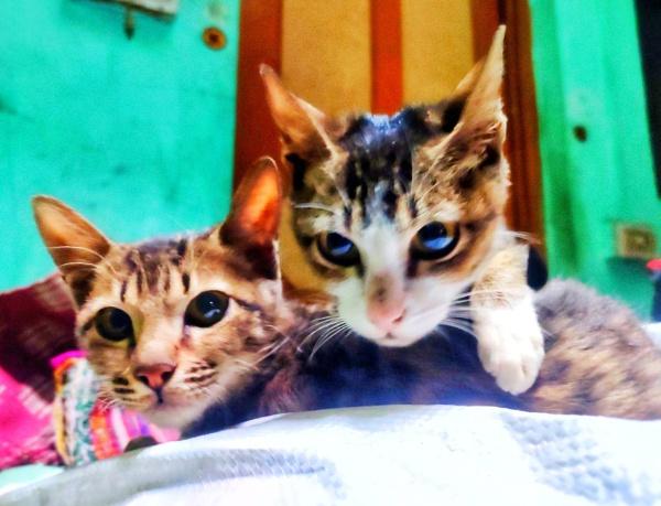 cute cat by Nityam