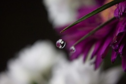 Reflections of a flower