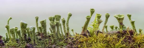 Lichen by chase