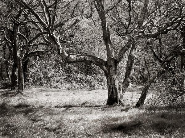 Dapley wood by JMRead