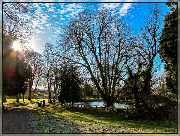 Winter Sun by Sylviwhalley