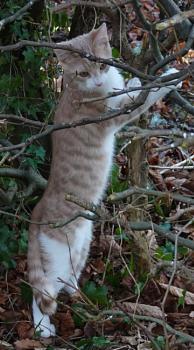Winston the kitten tree climbing