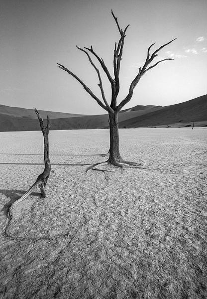 Namibia Dead Vlei by rontear