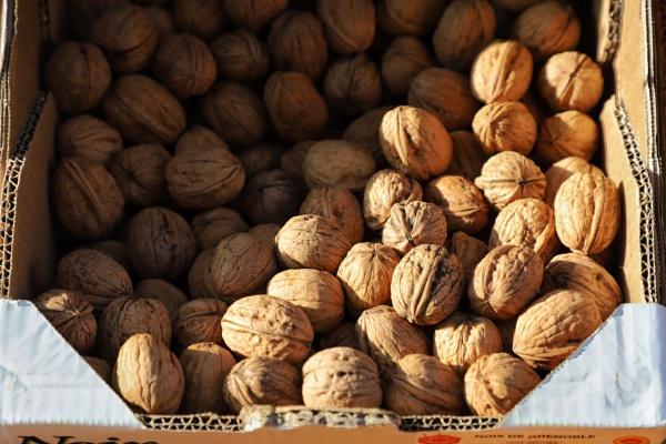 Walnuts by Merlin_k