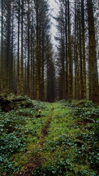 Tall trees by Meditator